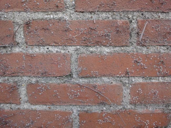 klimplant op muur